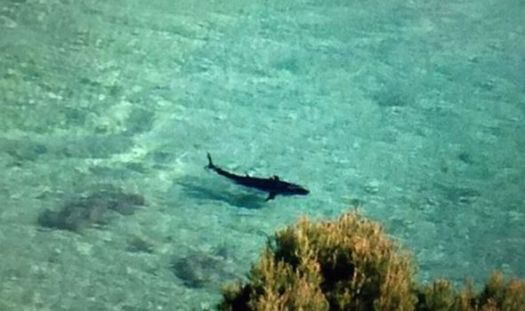 """shark"" Mallorca, Majorca,"